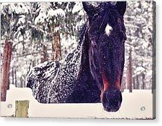 Snowy Spirit Acrylic Print