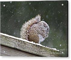 Snowy Squirrel Acrylic Print by Karin Pinkham