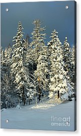 Acrylic Print featuring the painting Snowy Sunrise by Jesslyn Fraser