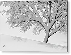 Snowy Tree Acrylic Print by Jay Nodianos