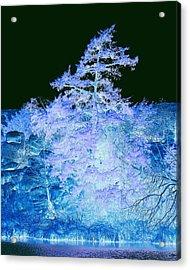 Snowy Tree Acrylic Print by Mickey Harkins