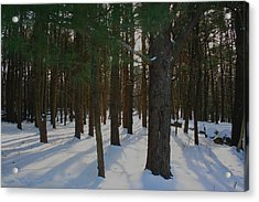 Snowy Trees Acrylic Print by Stephen Melcher