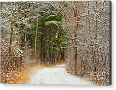 Snowy Tunnel Of Trees Acrylic Print by Terri Gostola