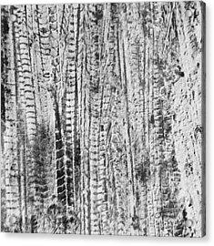 Snowy Tyre Tracks Acrylic Print