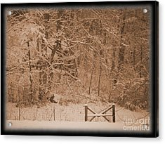 Snowy Woods In Bronze Acrylic Print by Jamie Mcclellan Elsner