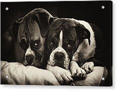 Snuggle Bug Boxer Dogs Acrylic Print by Stephanie McDowell