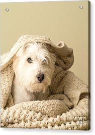 Snuggle Dog Acrylic Print by Edward Fielding