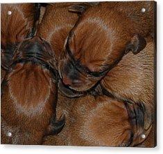 Snuggle Acrylic Print by Mim White