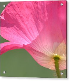 So Pretty Pink Poppy Acrylic Print