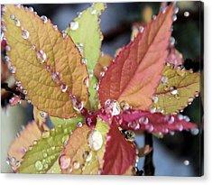 Soaking Rain Acrylic Print by Gene Cyr