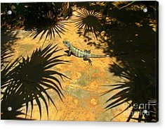 Soaking Up The Rays Acrylic Print by Halifax photographer John Malone