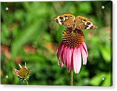 Acrylic Print featuring the photograph Soaking Up The Sun by Dave Files
