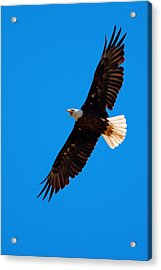 Acrylic Print featuring the photograph Soaring by Aaron Whittemore