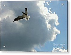 Acrylic Print featuring the photograph Soaring by Jeanne Forsythe
