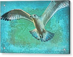 Soaring On Lifes Air Drafts Acrylic Print by Deborah Benoit