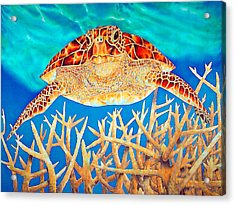 Sea  Turtle Soaring Over Staghorn Acrylic Print