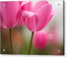 Soaring Pink Tulips Acrylic Print by Mike Reid