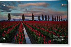 Soaring Skagit Valley Skies Acrylic Print