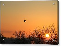 Soaring Sunrise 1 Acrylic Print by Jay Nodianos