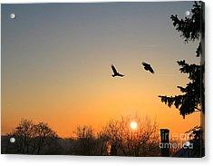 Soaring Sunrise 3 Acrylic Print