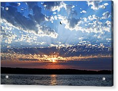 Soaring Sunset Acrylic Print by Anthony Baatz