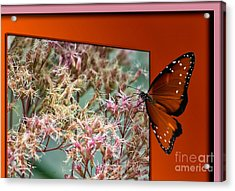 Social Butterfly 03 Acrylic Print by Thomas Woolworth