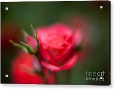 Soft And Peaceful Acrylic Print by Mike Reid