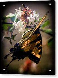 Soft As The Morning Light Acrylic Print by Karen Wiles