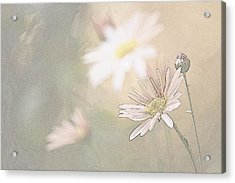 Soft Aster Acrylic Print
