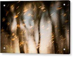 Soft Autumn Acrylic Print by Steven Milner