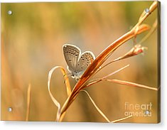 Soft Baby Blue Acrylic Print by Debbie Green