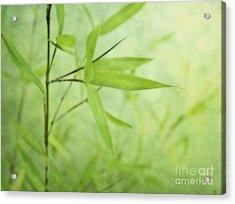 Soft Bamboo Acrylic Print by Priska Wettstein