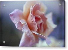 Soft Beauty Acrylic Print