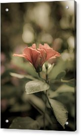 Soft Beauty Acrylic Print