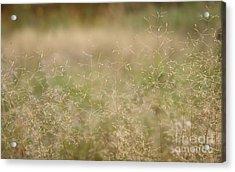 Soft Bent Grass Acrylic Print by Jolanta Meskauskiene