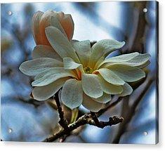 Soft Blooms Acrylic Print by Rowana Ray