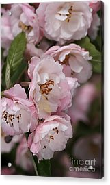 Soft Blossom Acrylic Print