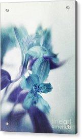Soft Blues Acrylic Print by Priska Wettstein