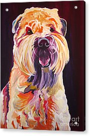 Soft Coated Wheaten Terrier - Bailey Acrylic Print by Alicia VanNoy Call