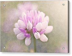 Soft Color Clover Acrylic Print by Faith Simbeck
