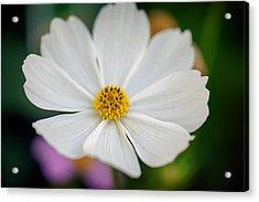 Soft Color Flower Art Acrylic Print by Tammy Smith