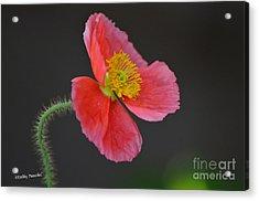 Soft Acrylic Print by Debby Pueschel