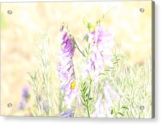 Soft Desert Flower Acrylic Print by Rich Collins