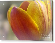 Acrylic Print featuring the photograph Soft Details  by John S