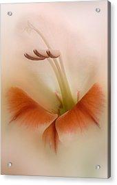 Soft Gladiolus Acrylic Print by Brian Roscorla