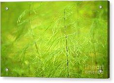 Soft Green Wildflower Acrylic Print by Jolanta Meskauskiene