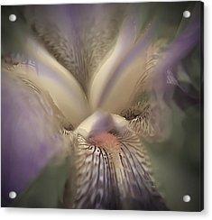 Soft Iris Flower Acrylic Print
