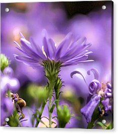 Acrylic Print featuring the photograph Soft Lilac by Leif Sohlman