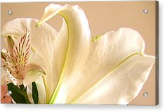 Acrylic Print featuring the photograph Soft Lily Photograph by Mary Bedy