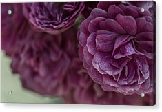 Acrylic Print featuring the photograph Soft Melody by Julie Andel